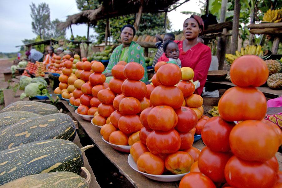 Commerçant-tomate